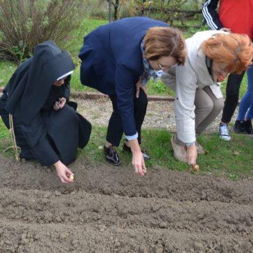 Sadzenie żonkili dla Hospicjum w Miechowie